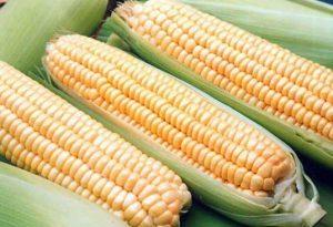Как быстро сварить кукурузу