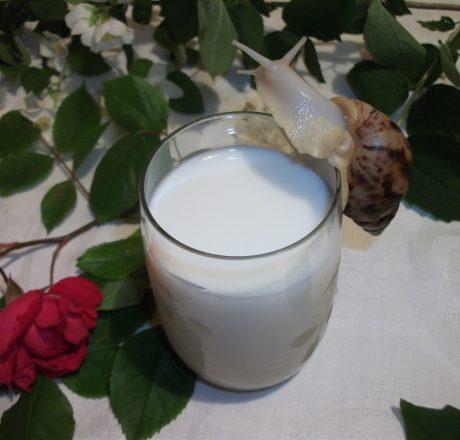 Вред и польза коровьего молока
