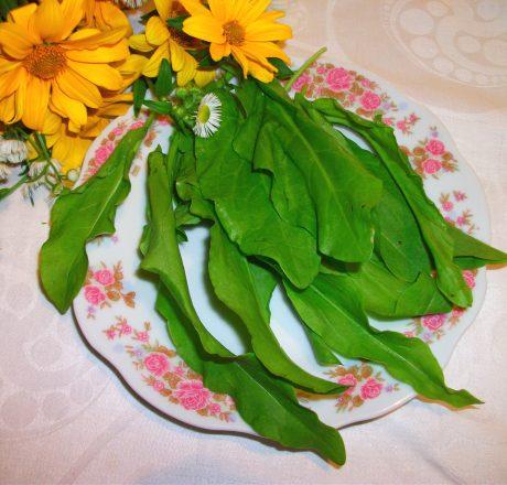 Щавель – польза с кислинкой