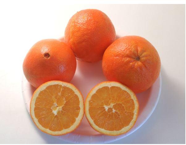сорта апельсинов