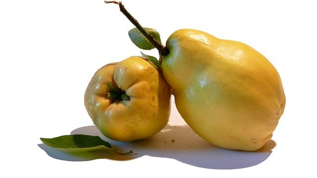 Айва – это ароматный осенний фрукт с терпким и насыщенным вкусом, напоминающим яблоко или грушу. Плоды желтого цвета, покрытые мягкими ворсинками, выращиваются на деревьях или кустах и имеют твердую, малосочную мякоть. Чаще всего фрукты употребляются после термической обработки, которая делает их более сладкими и сочными. Но айва ценится не только за необычные вкусовые качества, но и за чрезвычайно богатый биохимический состав, обеспечивающий полезные свойства айвы. Состав плодов айвы Айва – это съедобные плоды листопадного растения с красивыми, пышными цветами и темно-зелеными листьями. Выделяется три ботанических вида айвы – китайская, японская и обыкновенная. Содержание плодов айвы: ·        витамины группы А, В1, В2, В3, В5, В6, В9, С, Е, К и РР; ·        микро- и макроэлементы – железо, калий, марганец, цинк, медь, селен, фосфор, кальций; ·        эфирные масла; ·        органические кислоты; ·        пектины; ·        сахара; ·        дубильные вещества; ·         жирные масла; ·        полифенолы; ·        гликозиды. Полезные вещества сохраняются в плодах после вяления, сушки или термической обработки. Употребление свежей или сушеной айвы помогает восполнить суточную потребность организма человека в витаминно-минеральных элементах. Полезные свойства фрукта Польза и вред японской айвы для здоровья подтверждены официальной медициной. Благодаря уникальному биохимическому составу ароматные фрукты рекомендуется употреблять как для лечения, так и для профилактики многих заболеваний у взрослого или ребенка. Чем полезна айва для здоровья: 1.      Укрепляет иммунную систему организма, уменьшая восприимчивость к различным вирусам, инфекциям и болезнетворным бактериям. 2.      Насыщает организм необходимым количеством железа, помогая бороться с анемией. 3.      Улучшает работу нервной системы, нормализует сон. 4.      Помогает восстановить силы после физических или умственных нагрузок, повышает активность и работоспособность. 5.      Нормализует свертываемость крови и к